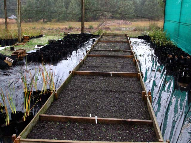 Beds_of_newly_sown_varieties_of_Cyranthus