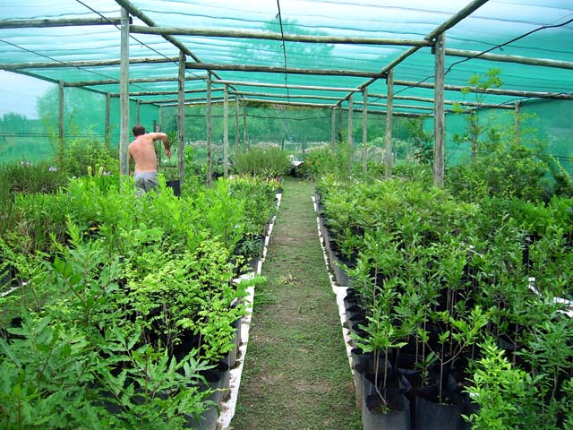 Greenhouse_trees